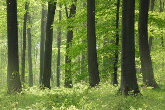 Lichter Wald im Naturschutzgroßprojekt Senne