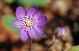 Das Naturschutzgroßprojekt zeichnet sich durch eine hohe Dichte und Vielfalt charakteristischer Pflanzen aus.