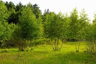 Junge Bäume bieten einen Lebensraum für die Artenvielfalt von morgen.