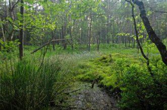 575 Farn- und Blütenpflanzen hat der NGP zu bieten auch Dank der vielfältigen Landschaft mit Wäldern und Bachläufen.