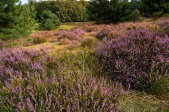 Trockenen und feuchten Heidelandschaften sowie naturnahen Sandbächen sorgen für eine große Vielfalt in Flora und Faune.
