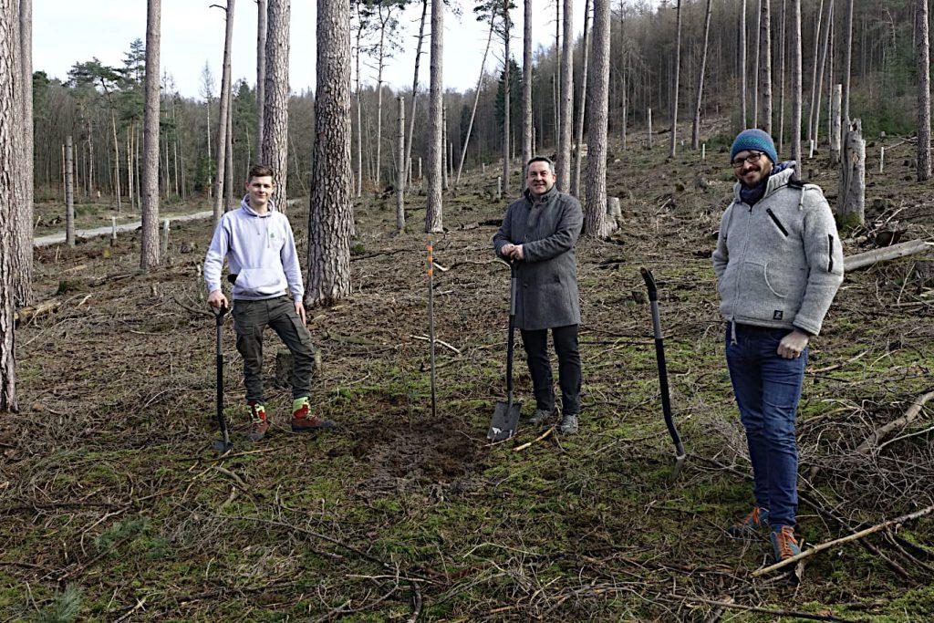 Zm Auftakt der Kooperation mit dem NGP Senne und teutoburger Wald werden 150 Eichen gepflanzt